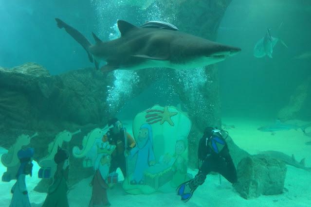 Belén tiburones