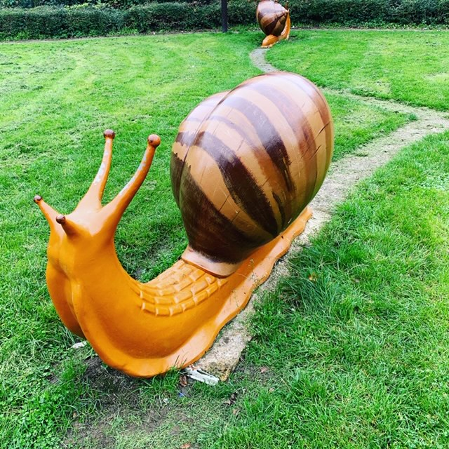Giant Snail with trail, in a field