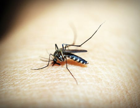 6 Natural Ways to Repel Mosquitoes