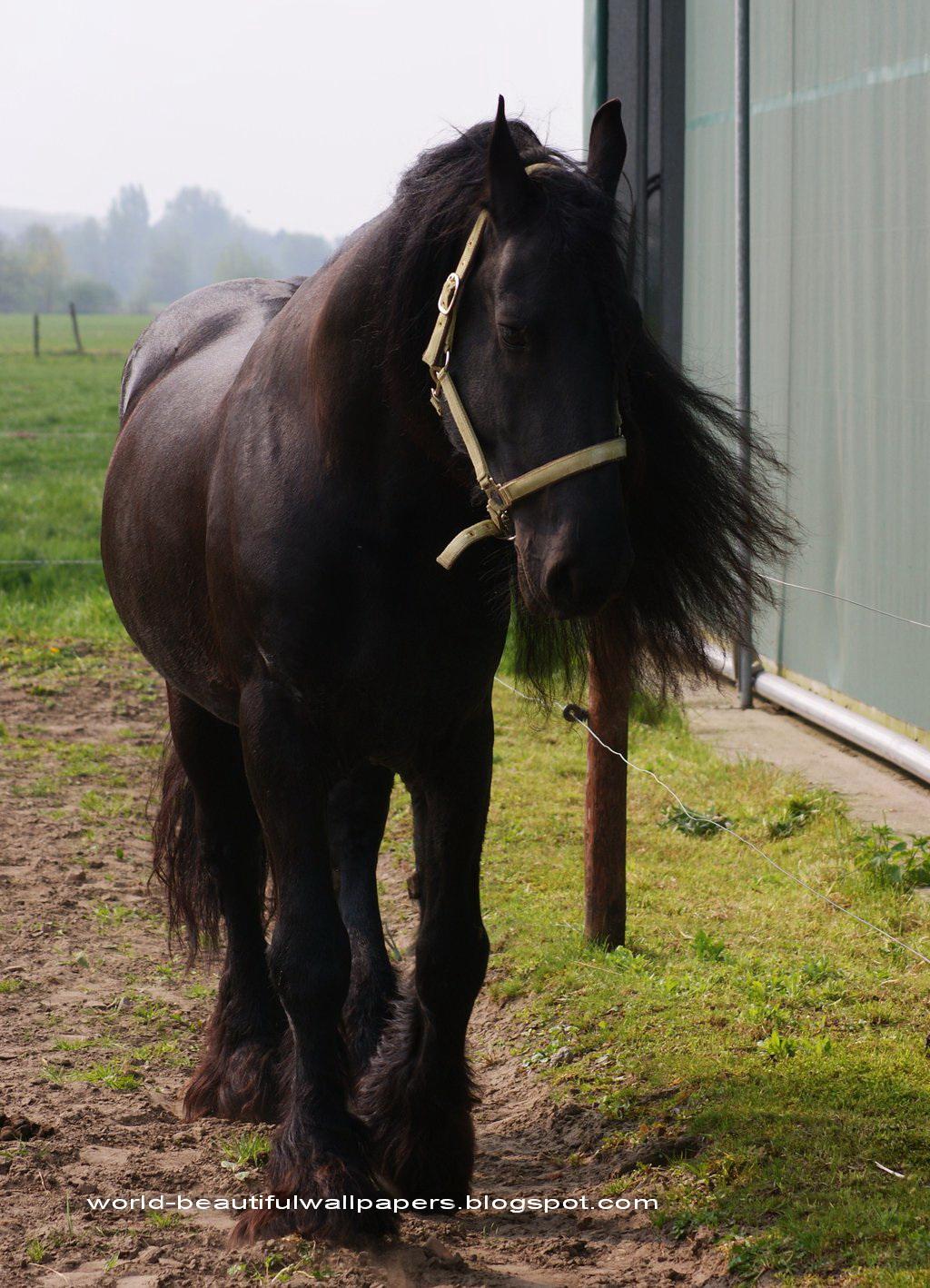 Stihl horse user on pof dating site