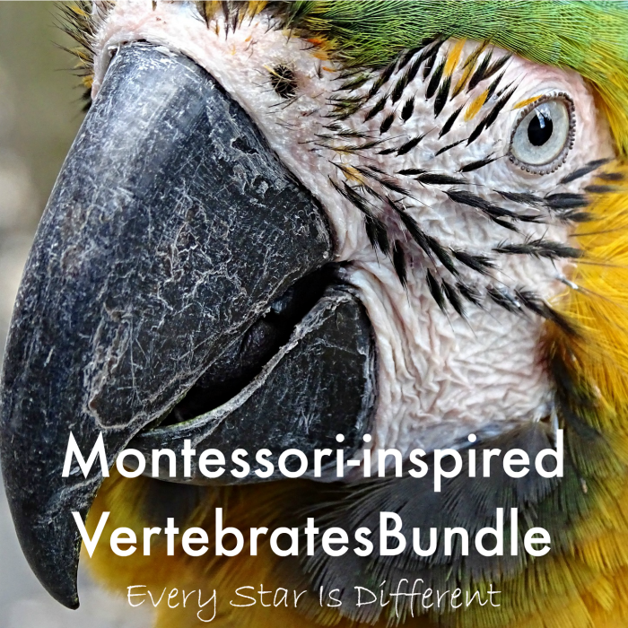 Montessori-inspired Vertebrates Bundle