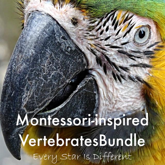Montessori-inspired Vertebrates Bundle