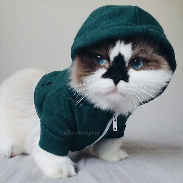 MASYALLAH!! Rupanya ini Sebab Rasulullah Sukakan Kucing dari Sudut Sains. Untunglah siapa Bela Kucing. KERANA KUCING MEMPUNYAI..