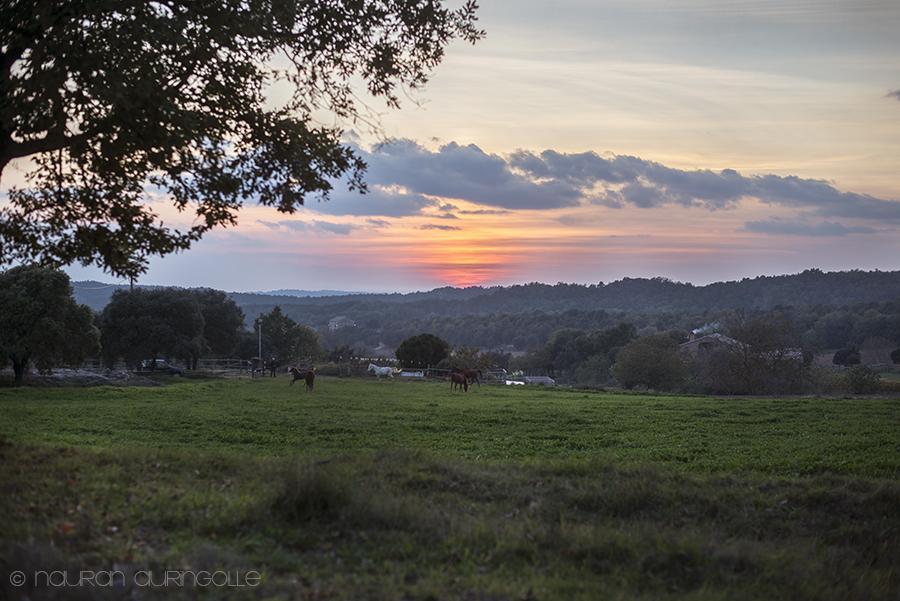 hevosia pellolla auringonlasku