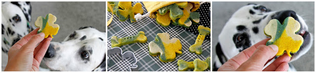 Dalmatian dogs with green and gold St. Patrick's Day dog treats