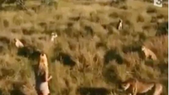 """فيديو مرعب لفتاة وسط مجموعة من النمور .. اشترته """"ناشيونال جيوجرافيك"""" بمليون دولار شاهد الفيديو هل يستحق"""