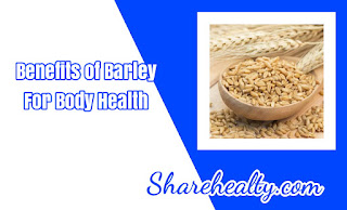 Barley: Benefits and Nutrients That Are Important For Body Health