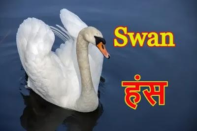 Love Birds Name in Hindi and English | पक्षियों के नाम हिंदी और अंग्रेजी में