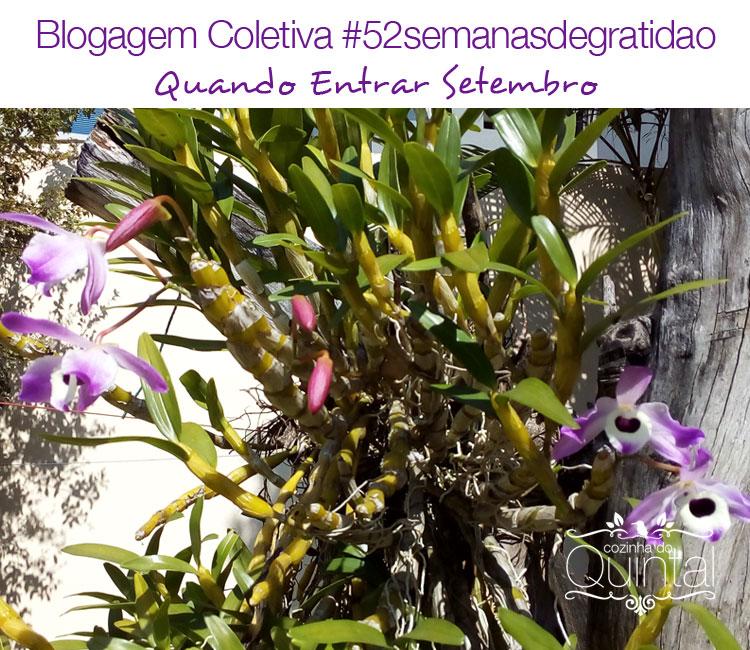 Orquídea em flor no meu quintal =)