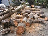 玉切りした樹木