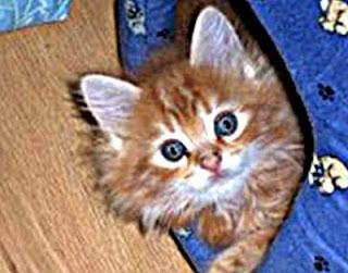 Gatito bonito de mi amor