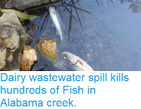 https://sciencythoughts.blogspot.com/2015/10/dairy-wastewater-spill-kills-hundreds.html