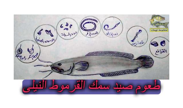 طريقة صيد سمك القرموط النيلي | سمك القرموط في مصر