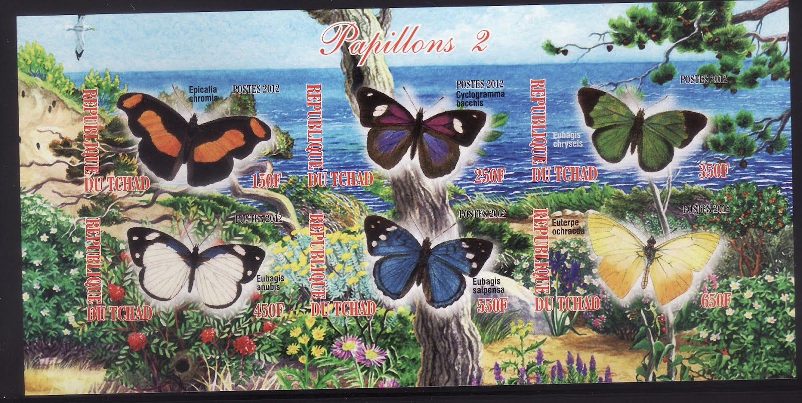 Koleksi Gambar Animasi Flora Dan Fauna Kantor Meme