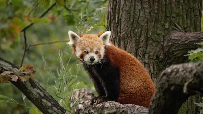 A korábbi szakmai vezető irányítja a Pécsi Állatkertet márciustól