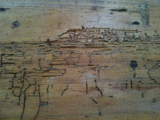 Signs of woodworm, woodworm, woodworm treatment
