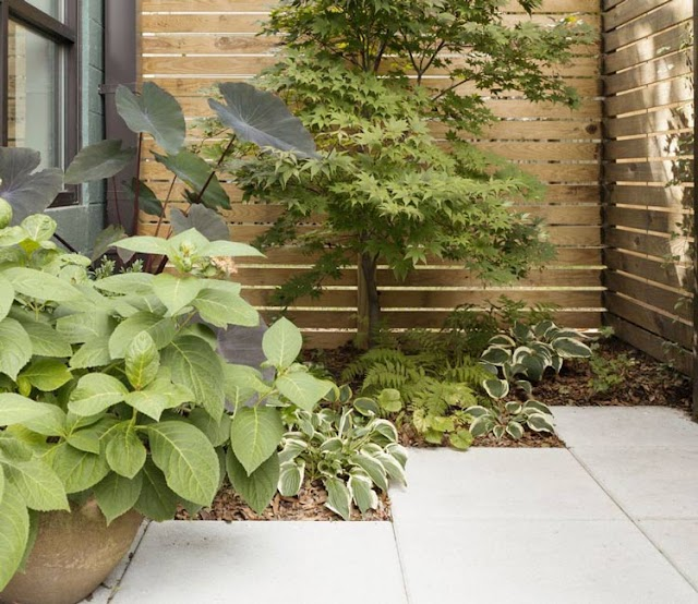 How to create a low-maintenance private cottage garden