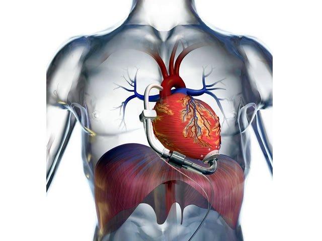Imágenes del corazón humano | Inf Salud - Tu Blog de Salud