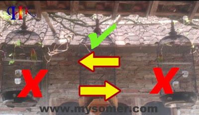 Tips uji coba latihan trek lovebird fighter