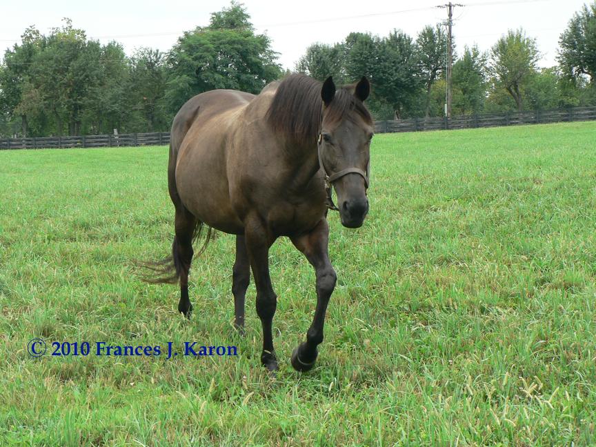 Running Rough Shod | Thoroughbred horse racing, Thoroughbred horse, Horses