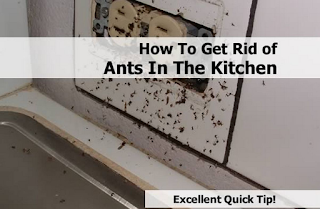 how to get rid of ants in a kitchen naturally