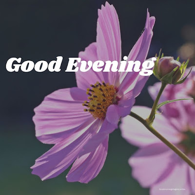 good evening images with flowers hd