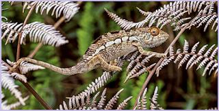 contoh hewan yang beradaptasi berupa tingkah laku dengan menyamar sesuai dengan tempatnya berada yaitu bunglon