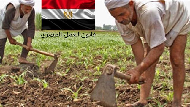 قانون العمل المصري، الحقوق و الواجبات