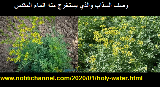 الماء المقدس في العقائد والأديان   استخدامات الماء المقدس