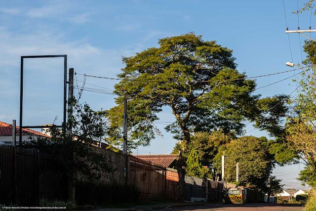 Árvore com um belo formato na Travessa Medianeira