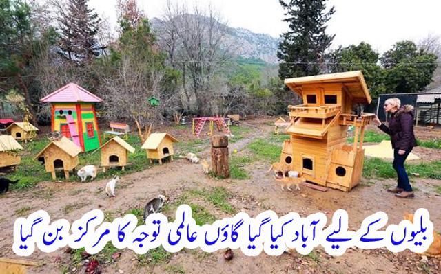 cat village in turkey