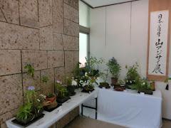 日本の自生アジサイ展