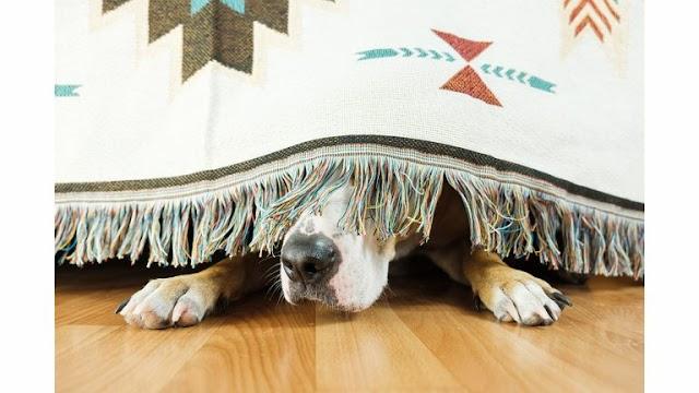 Σκύλος: Οκτώ πράγματα που τον κάνουν να φοβάται – Πώς να τον βοηθήσετε