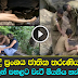 19 year old French girl dide at Ravana Ella - watch Video