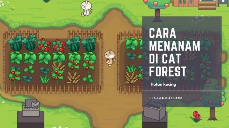 Cara Menanam di Game Cat Forest