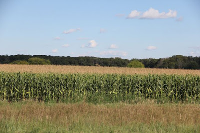 "is field corn really a ""food crop?"""