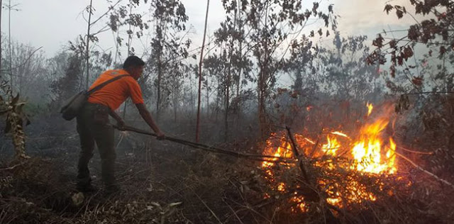 Hambat Kebakaran Lahan, Warga Tanggamus Lakukan Pagar Hidup