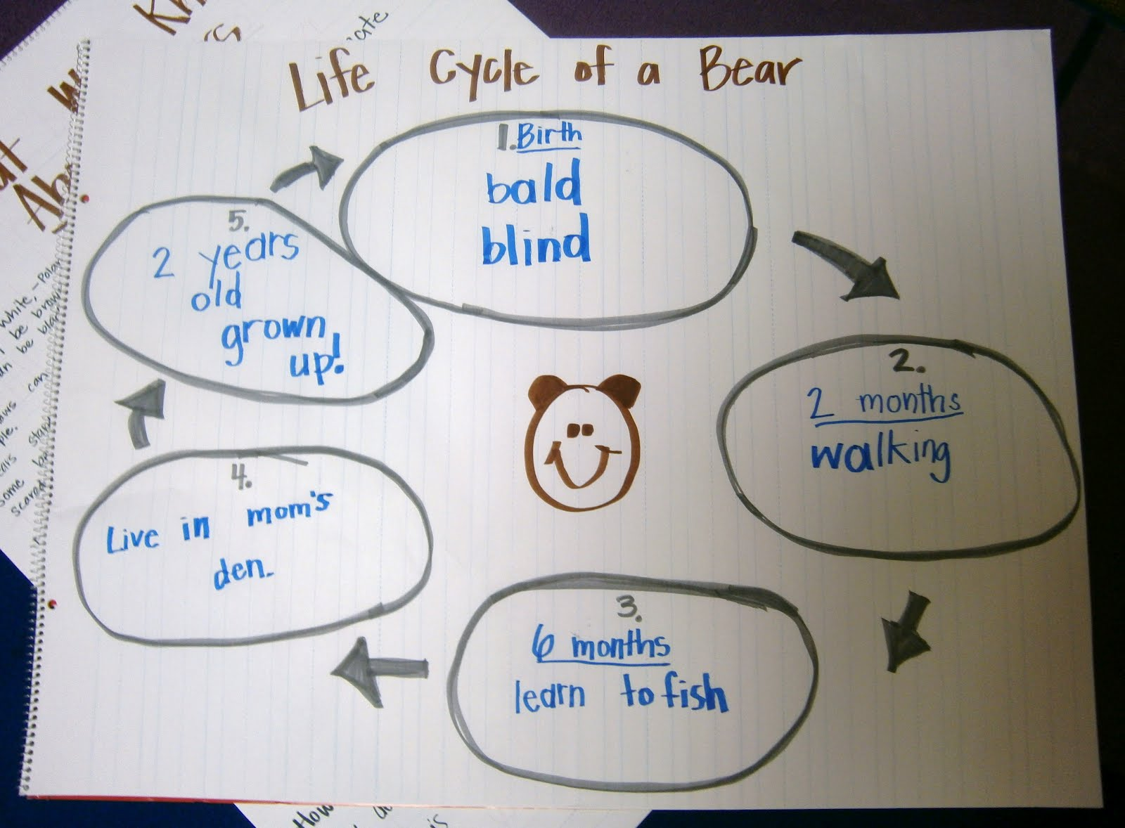 brown bear diagram chrysler wiring m2 14 bk yl life cycle