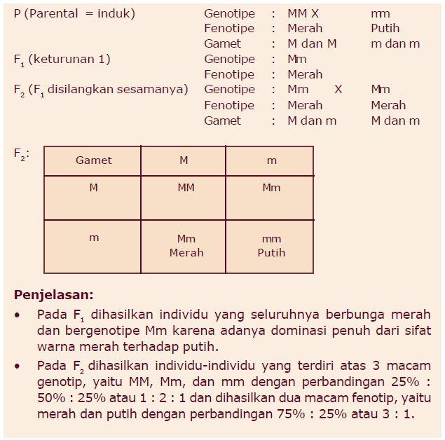 Contoh persilangan monohibrid dan dihibrid ccuart Choice Image