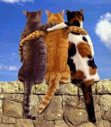 Perbezaan maksud antara sahabat, kawan, rakan dan kenalan.