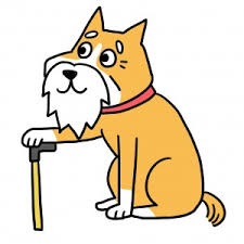 cães idosos e lesões
