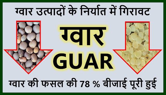 ग्वार उत्पादों के निर्यात में 5.5 % की कमी , Guar sowing area has decreased by 40% in comparison to previous year. ,  Guar, guar gum, guar price, guar gum price, guar demand, guar gum demand, guar seed production, guar seed stock, guar seed consumption, guar gum cultivation, guar gum cultivation in india, Guar gum farming, guar gum export from india , guar seed export, guar gum export, guar gum farming, guar gum cultivation consultancy, today guar price, today guar gum price, ग्वार, ग्वार गम, ग्वार मांग, ग्वार गम निर्यात 2018-2019, ग्वार गम निर्यात -2019, ग्वार उत्पादन, ग्वार कीमत, ग्वार गम मांग, Guar Gum, Guar seed, guar , guar gum, guar gum export from india, guar gum export to USA, guar demand USA, guar future price, guar future demand, guar production 2019, guar gum demand 2019, guar, guar gum, cluster beans, guar gum powder, guar gum price, guar gum uses, ncdex guar, guar price, guar gum price today, cyamopsis tetragonoloba, ncdex guar gum price, guar beans, guar rate today