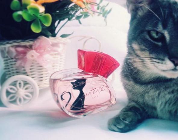 perfume intense cats