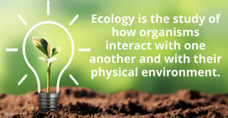 definition ecology