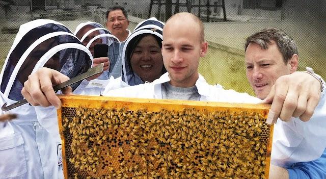 Φρικτή εξαπάτηση νέου μελισσοκόμου που πήγε σε σεμινάρια μελισσοκομίας...