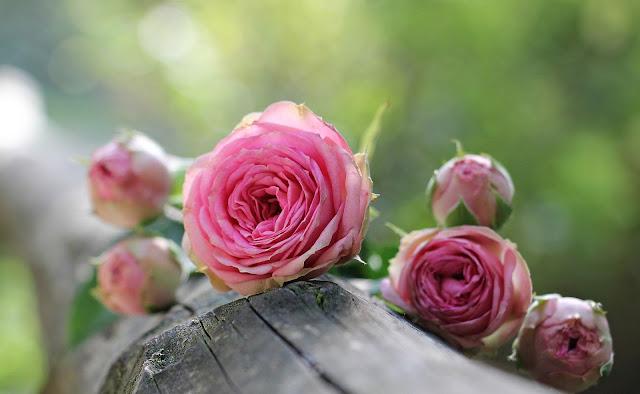أجمل خلفيات الزهور