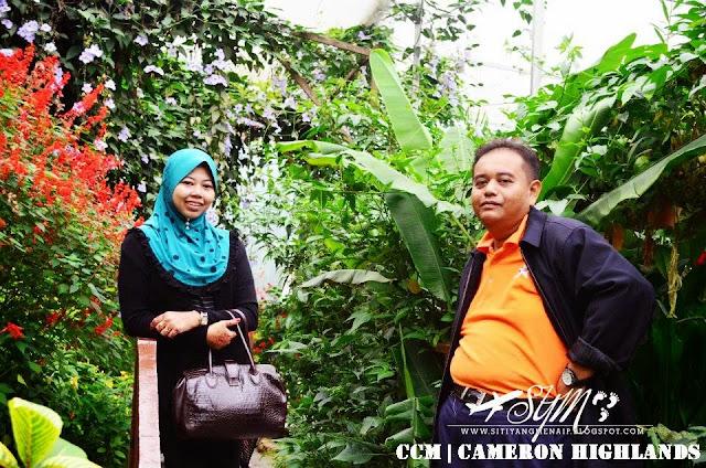 Cuti-Cuti Malaysia, Tempat Menarik Di Cameron Highlands, Butterfly Farm Di Cameron Highlands, Taman Rama-Rama Di Cameron Highlands, Tempat Makan Di Cameron Highlands, Makan Di Brinchang, Makan Sedap Di Cameron Highlands,