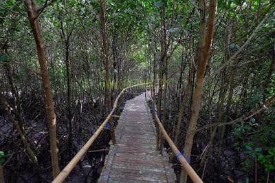 Hutan Mangrove