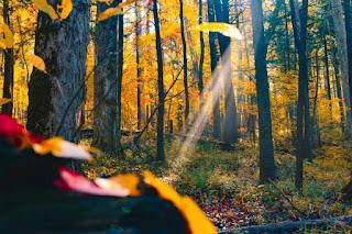 Autumn forest - Photo by Joshua Woroniecki on Unsplash