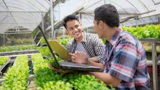 Beberapa Bisnis di Bidang Pertanian yang Memiliki Keuntungan Besar